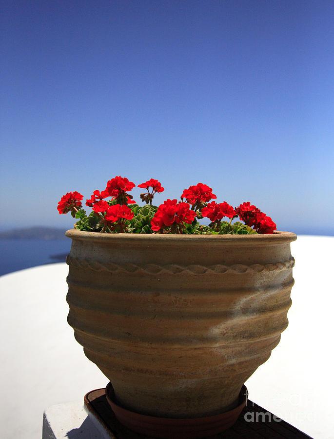 Bloom Photograph - Potted Geranium by Deborah Benbrook