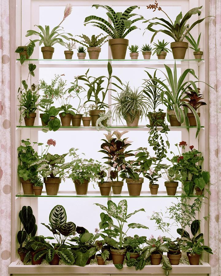Potted Plants On Shelves Photograph by Wiliam Grigsby