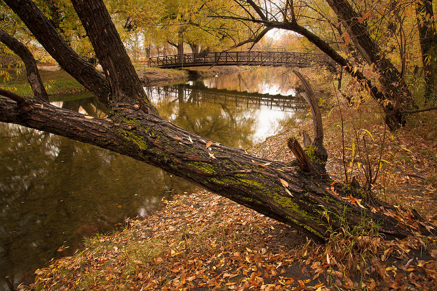 Bridge Photograph - Poudre Crossing  by Michael Van Beber