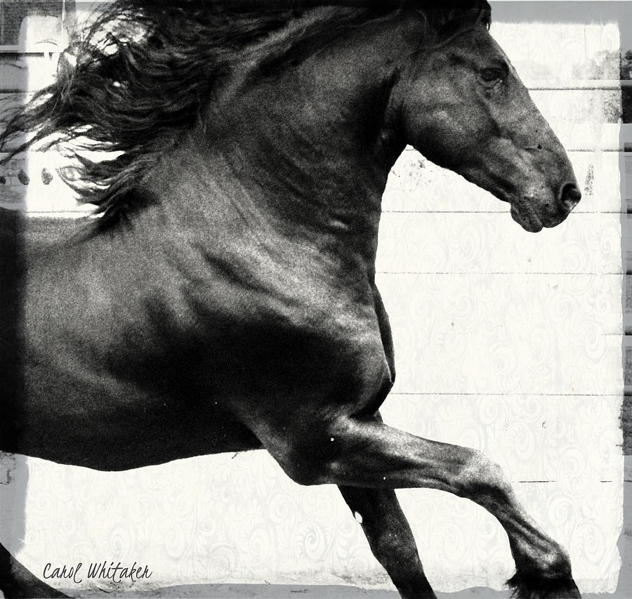 Acrylic Print Photograph - Power Of Stride by Royal Grove Fine Art