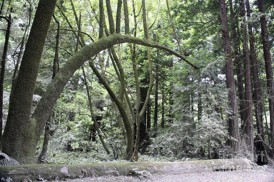 Landscape Photograph - pr 136 - Bowed Tree by Chris Berry