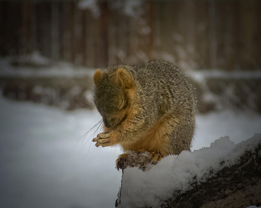 Animals Photograph - Prayer Time by Ernie Echols