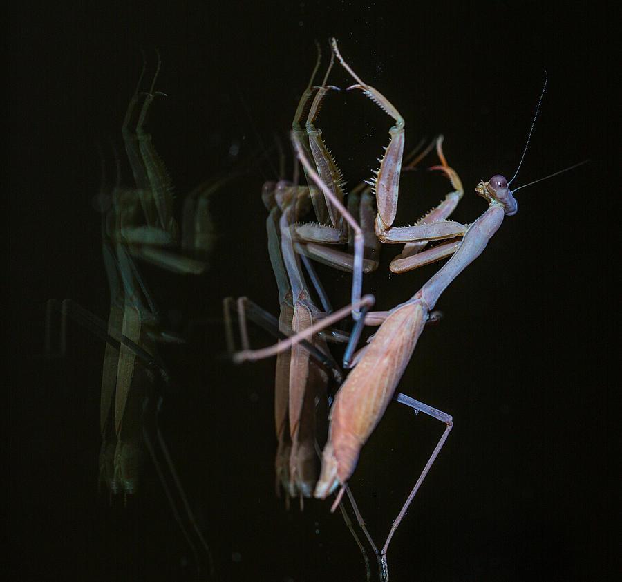 Praying Mantis Photograph - Praying Mantis 2 by Angela A Stanton