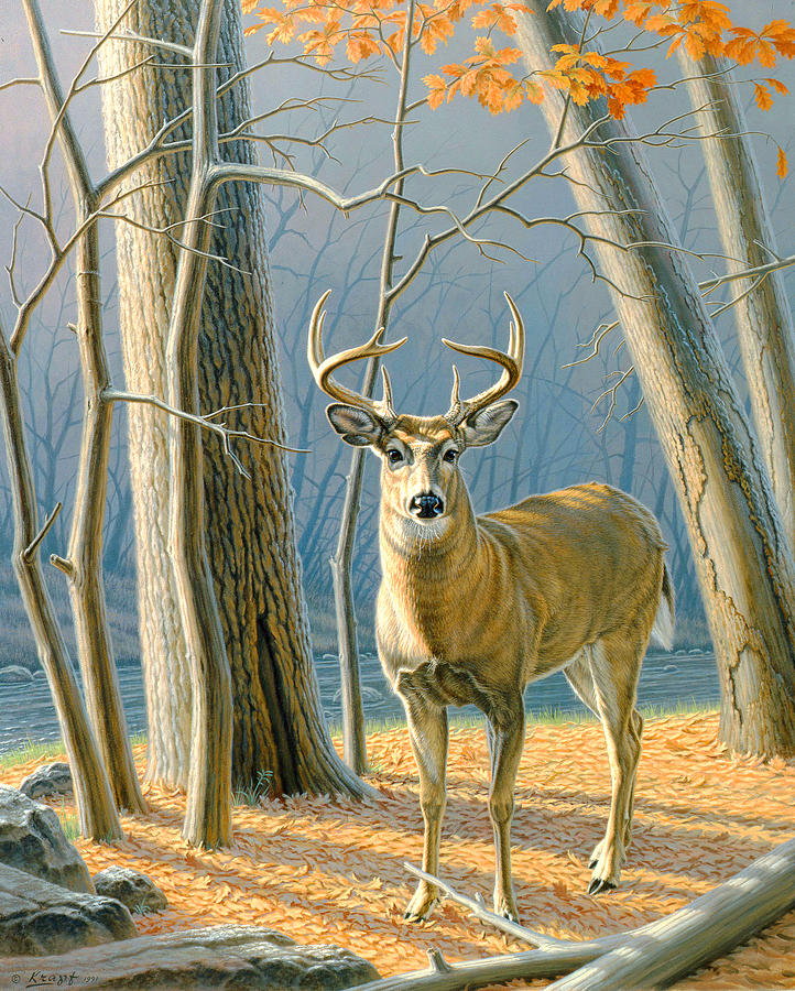 Wildlife Painting - Pre-flight- Whitetail Buck by Paul Krapf