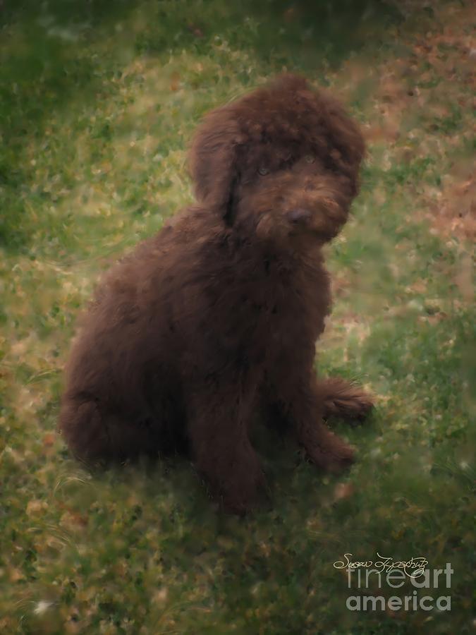 Dog Digital Art - Precious Australian Labradoodle by Susan  Lipschutz
