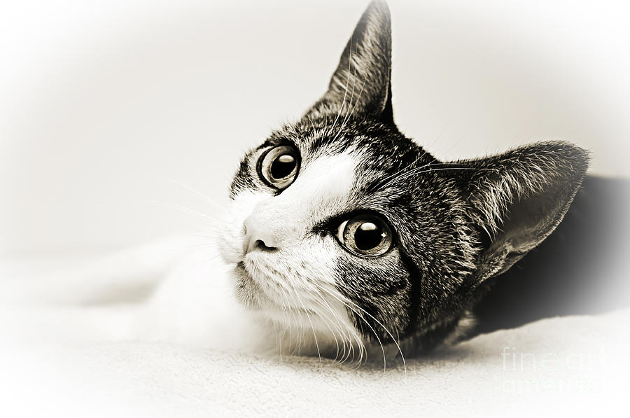 Cat Photograph - Precious Kitty by Andee Design