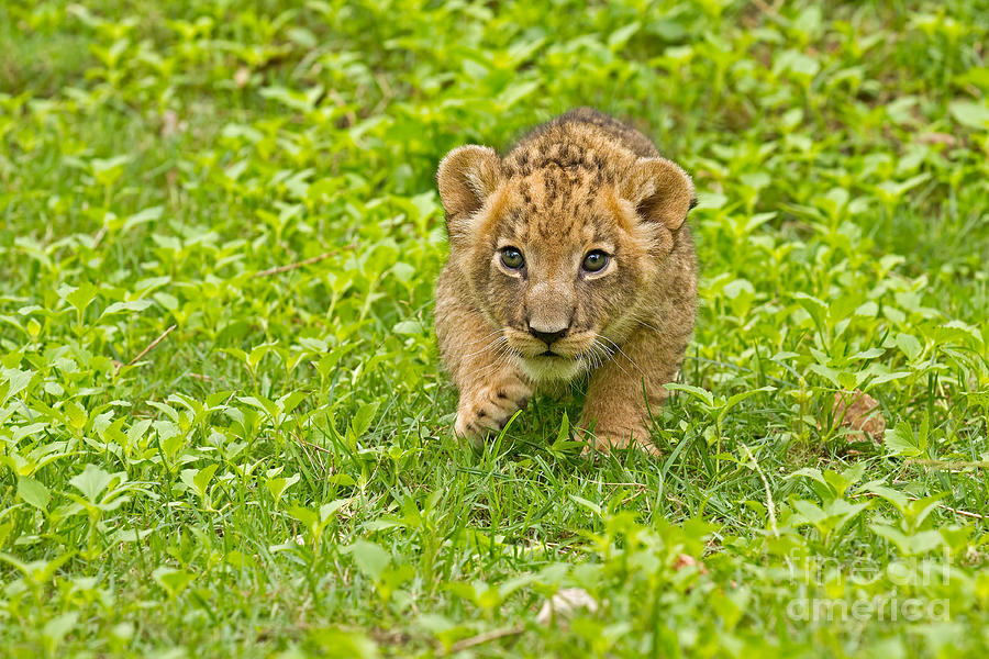 Adorable Photograph - Predator In The Making by Ashley Vincent