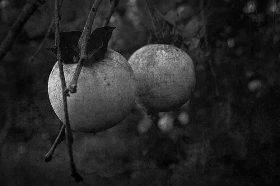 Persimmon Photograph - Predictions by Tommy Wallace