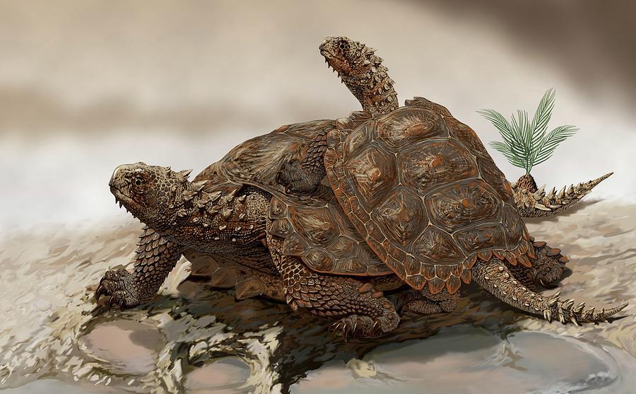 Animal Photograph - Prehistoric Turtles by Jaime Chirinos/science Photo Library