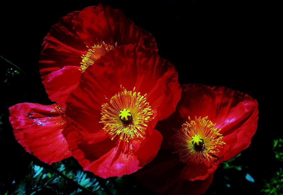 Poppy Photograph - Pretty As A Poppy by Helen Carson