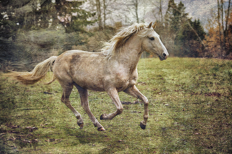 Rocky Mountain Horse Photograph - Pretty Boy by Peter Lindsay