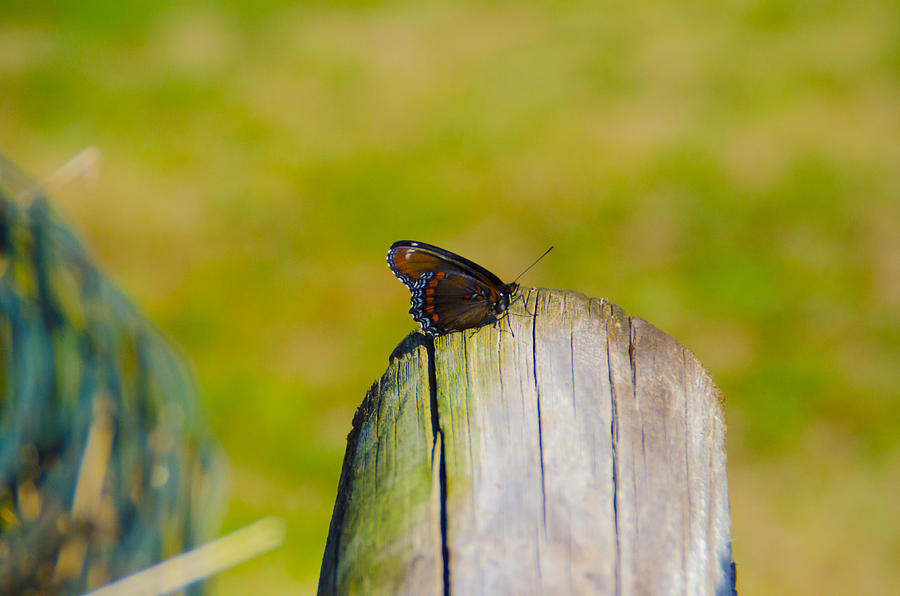 Pretty Butterfly Photograph