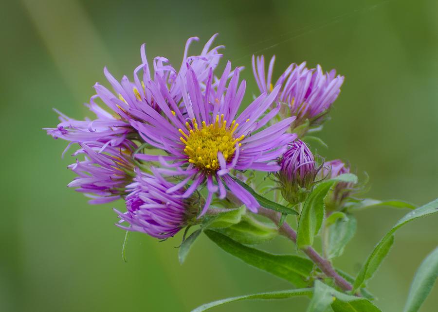 Pretty Flower Photograph
