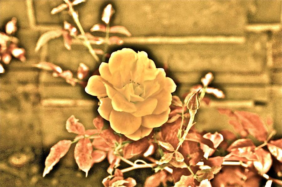 Flower Photograph - Pretty Flower by Joe  Burns