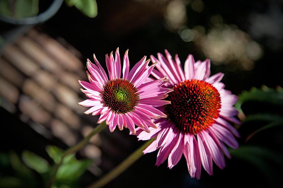 Flowers Photograph - Pretty Flowers by Joe Fernandez
