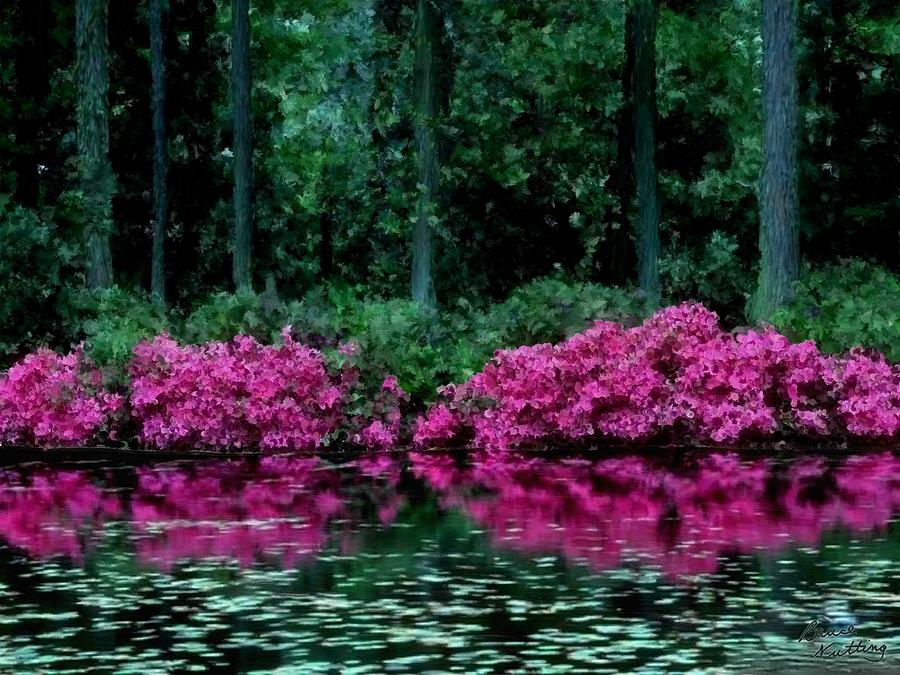 Flower Painting - Pretty Flowers on the Lake Side by Bruce Nutting