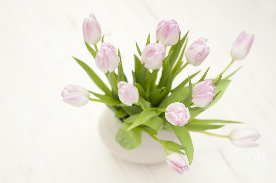 Arranged Photograph - Pretty In Pink by Anne Gilbert