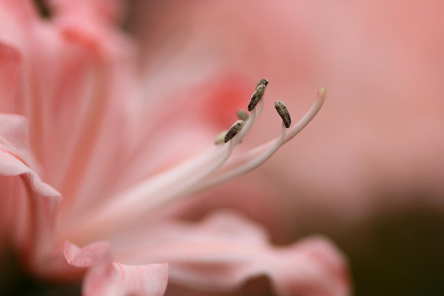 Pink Flower Photograph - Pretty In Pink by Jacqui Collett