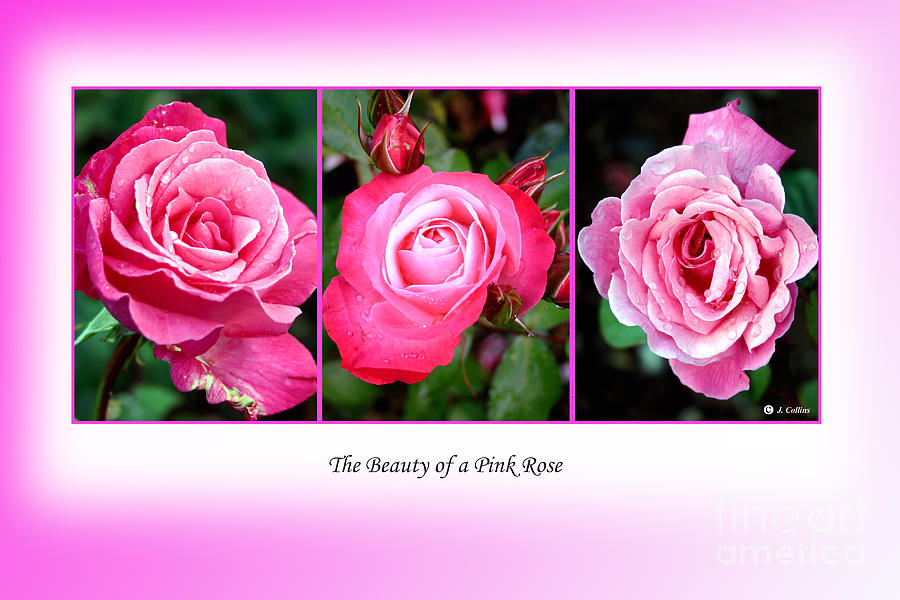 Flowers Canvas Print Photograph - Pretty In Pink Roses by Jo Collins