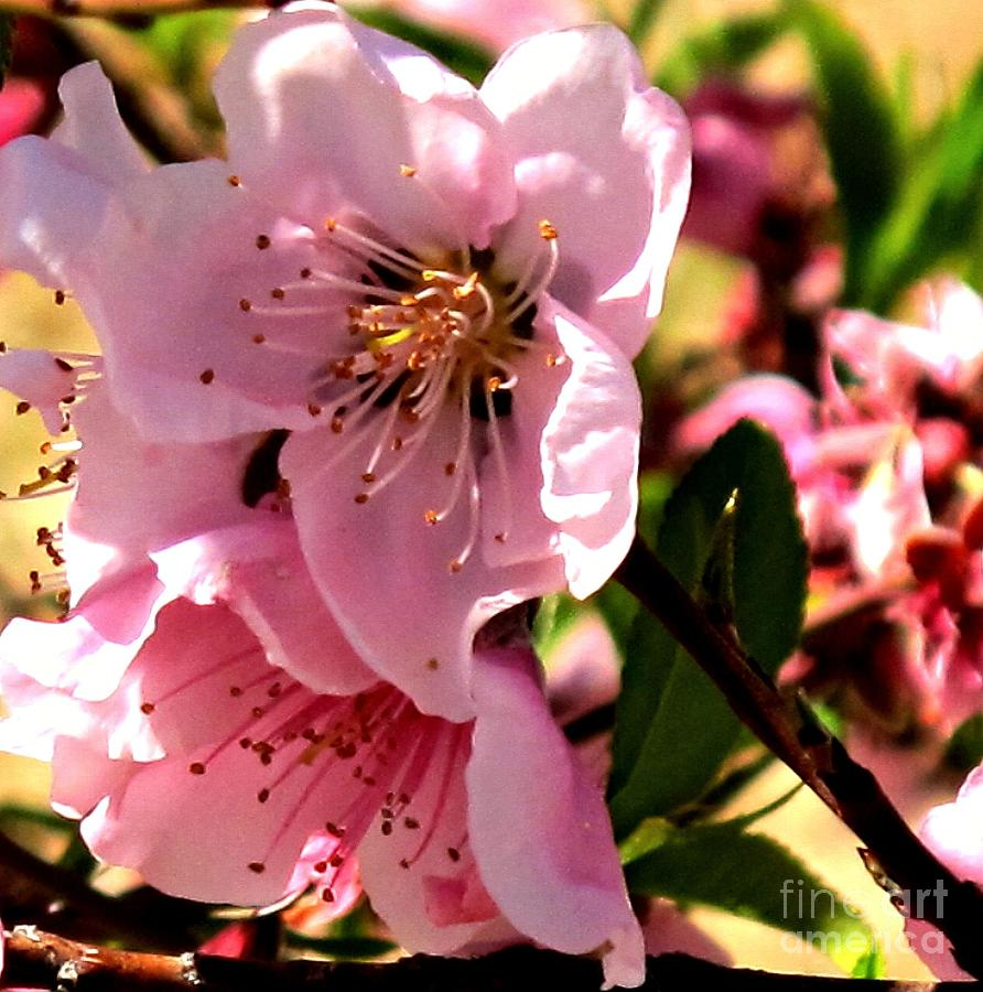 Pretty In Pink Spring Flowers Photograph By Michaline Bak