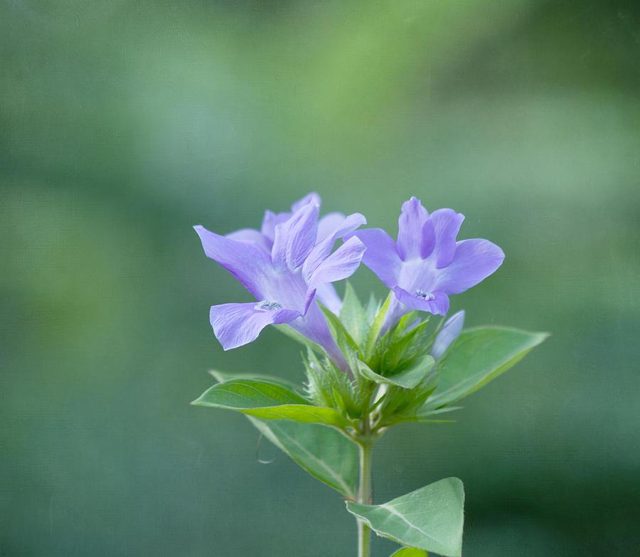 Purple Flower Photograph - Pretty In Purple by Kim Hojnacki