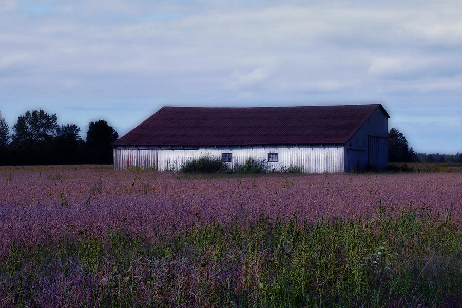 Barn Photograph - Pretty In Purple by Susan Kimball