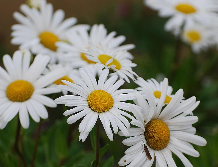 Fall Photograph - Pretty In White by Lorena Mahoney