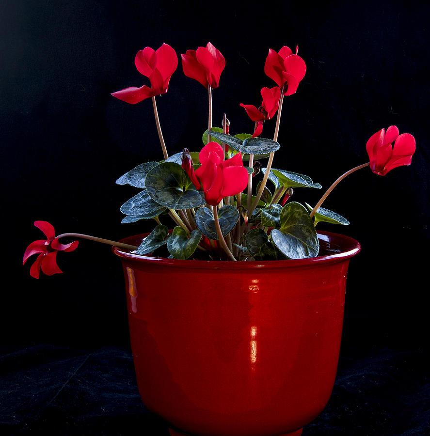 Color Photograph - Pretty by Jean Noren