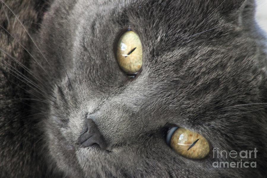 Eyes Photograph - Pretty Kitty Eyes by Darleen Stry
