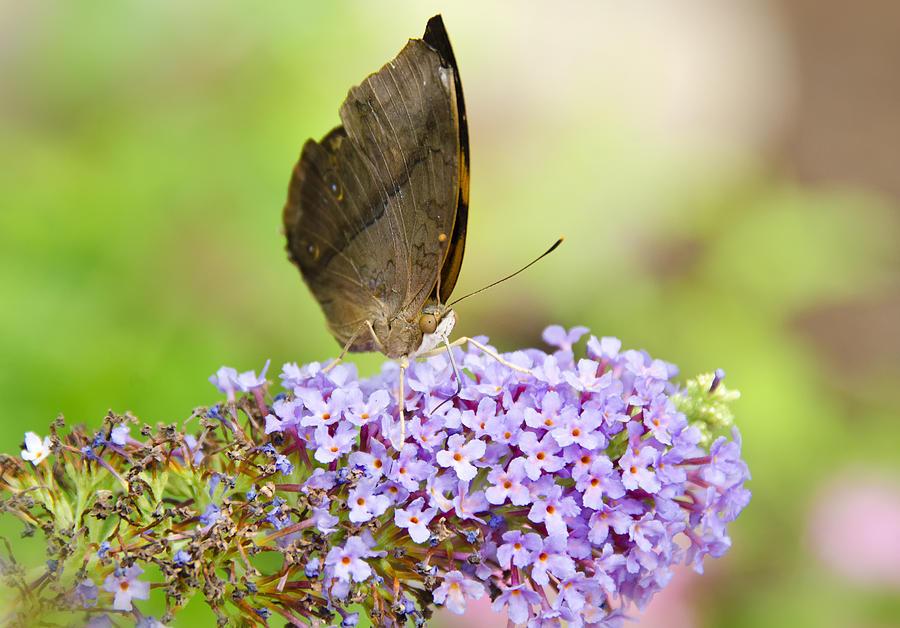 Butterflies Photograph - Pretty Little Things  by Saija  Lehtonen