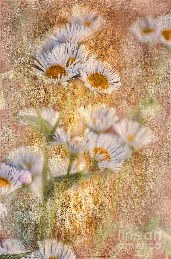 Nature Photograph - Pretty Little Weeds IIi by Debbie Portwood