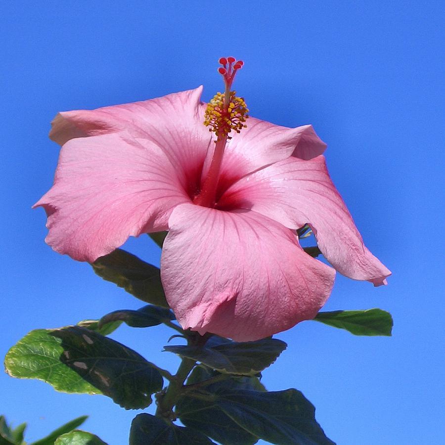 Flower Photograph - Pretty on Blue by Lin Grosvenor