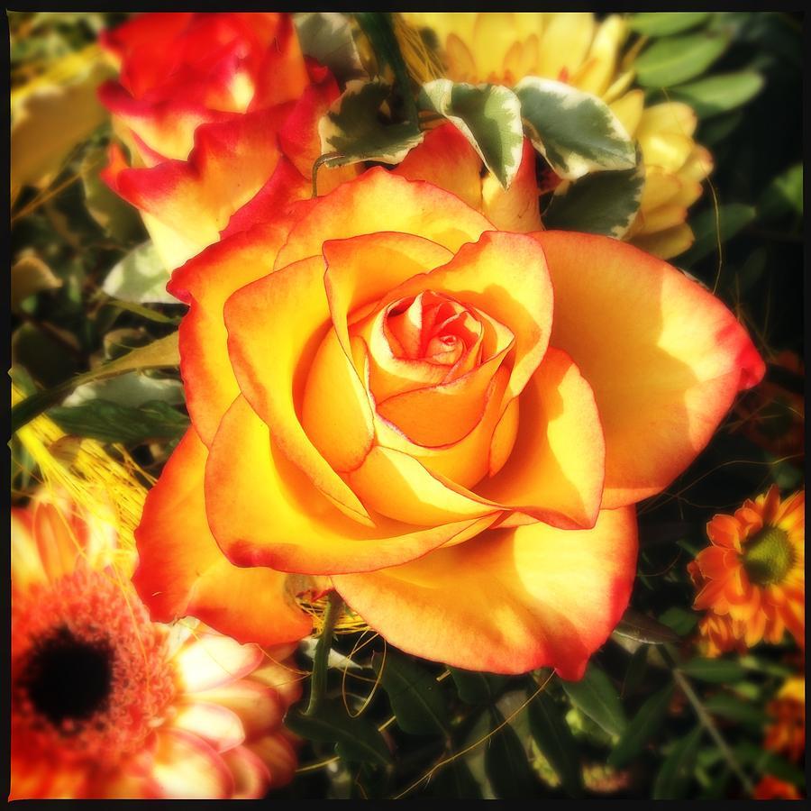 Rose Photograph - Pretty Orange Rose by Matthias Hauser