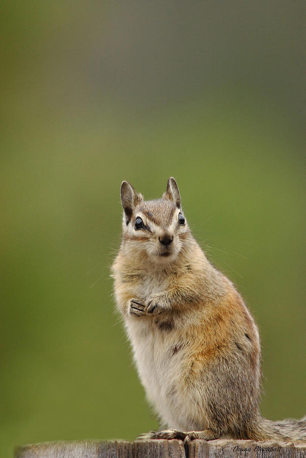 Squirrel Photograph - Pretty Please by Donna Blackhall