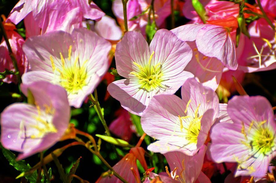 Flowers Photograph - Pretty Purple by Marty Koch