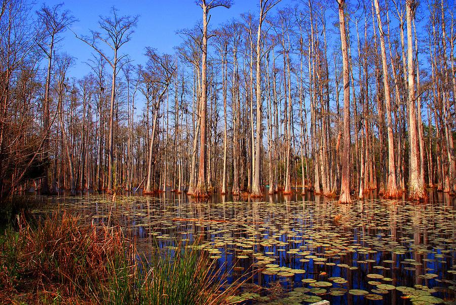 Swamp Photograph - Pretty Swamp Scene by Susanne Van Hulst