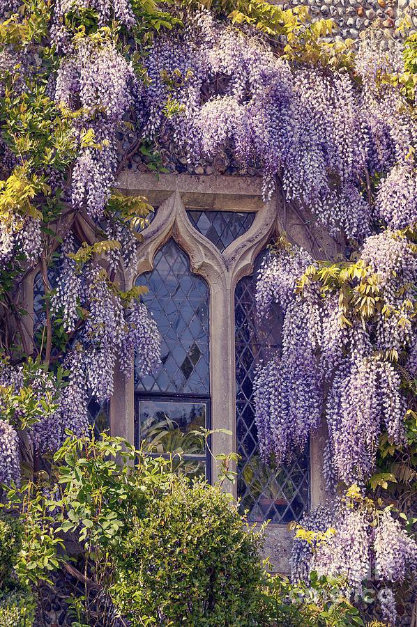 Anniversary Photograph - Pretty Window by Svetlana Sewell