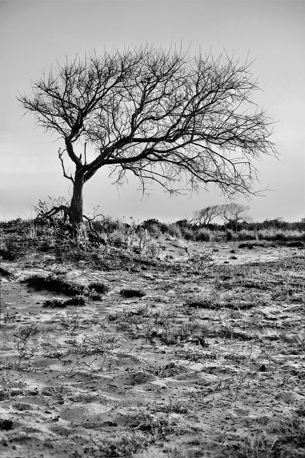 Assateague Island Photograph - Prevailing Bw by JC Findley