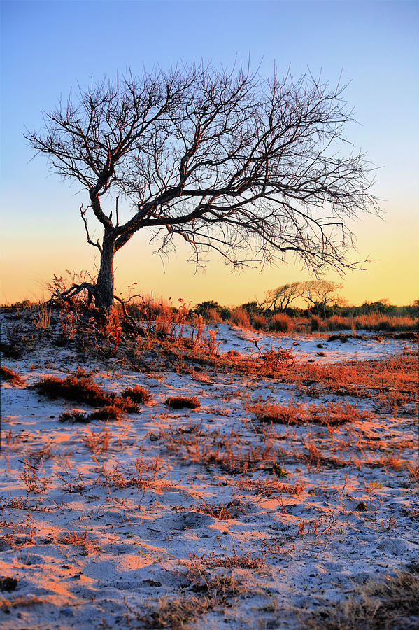 Assateague Island Photograph - Prevailing by JC Findley