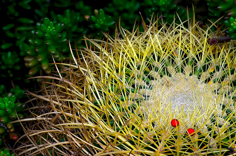 Cacti Photograph - Prickly by Camille Lopez