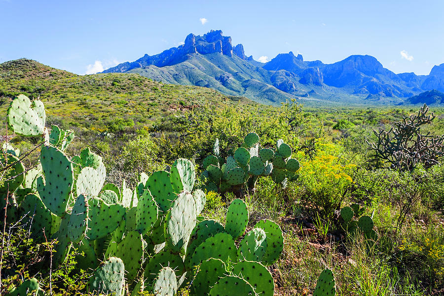 Prickly Pear Cacti, Casa Grande Peak Photograph by Dszc