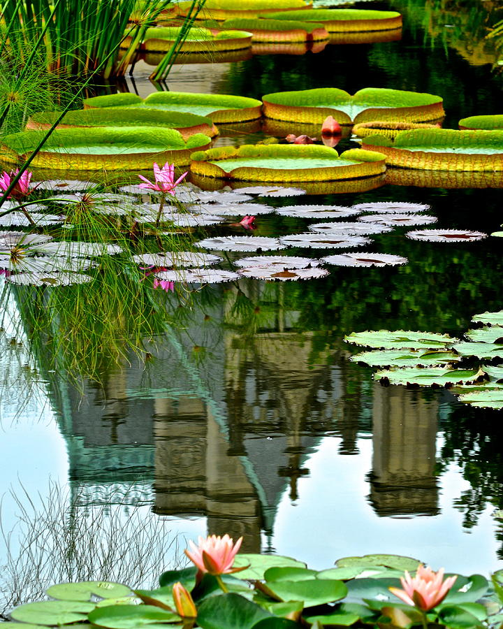 Lily Photograph - Prince Charmings Lily Pond by Frozen in Time Fine Art Photography
