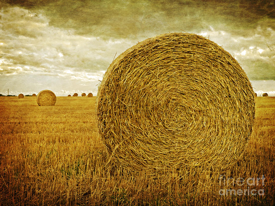 Hay Photograph - Prince Edward Island Pastoral Farm Fields by Edward Fielding
