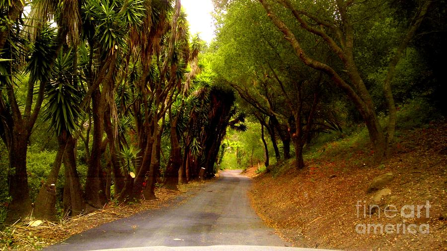 Path Photograph - Private Property by Sharon Costa