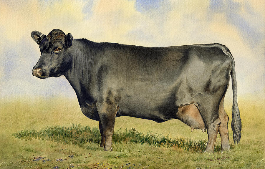 Watercolor Painting - Prize Dexter Cow by Anthony Forster
