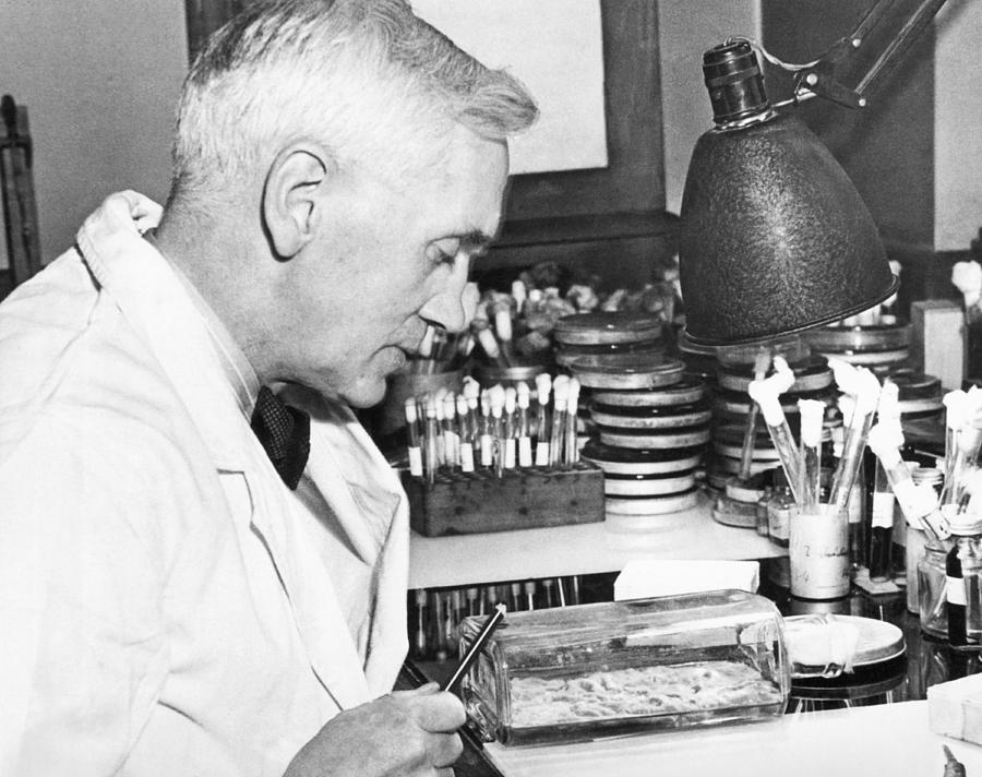 1940s Photograph - Professor Alexander Fleming by Underwood Archives