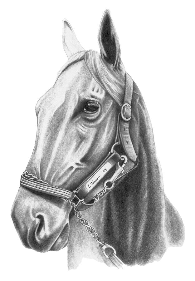 Horse Drawing - Profile by Lawrence Tripoli
