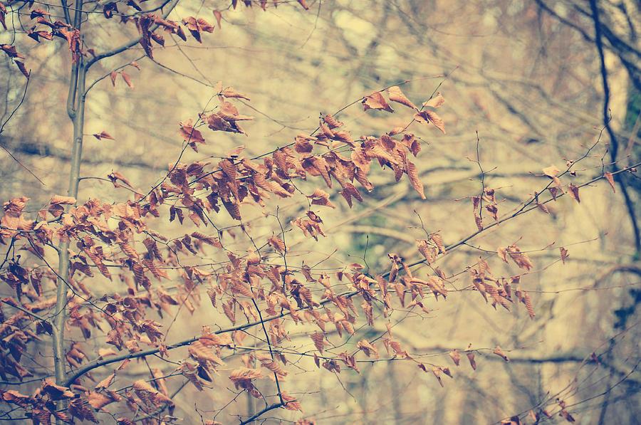 Leaves Photograph - Promise by Taylan Apukovska