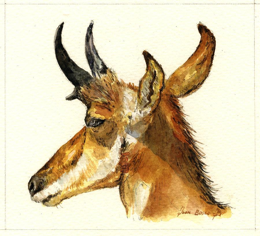 American Painting - Pronghorn Antelope by Juan  Bosco