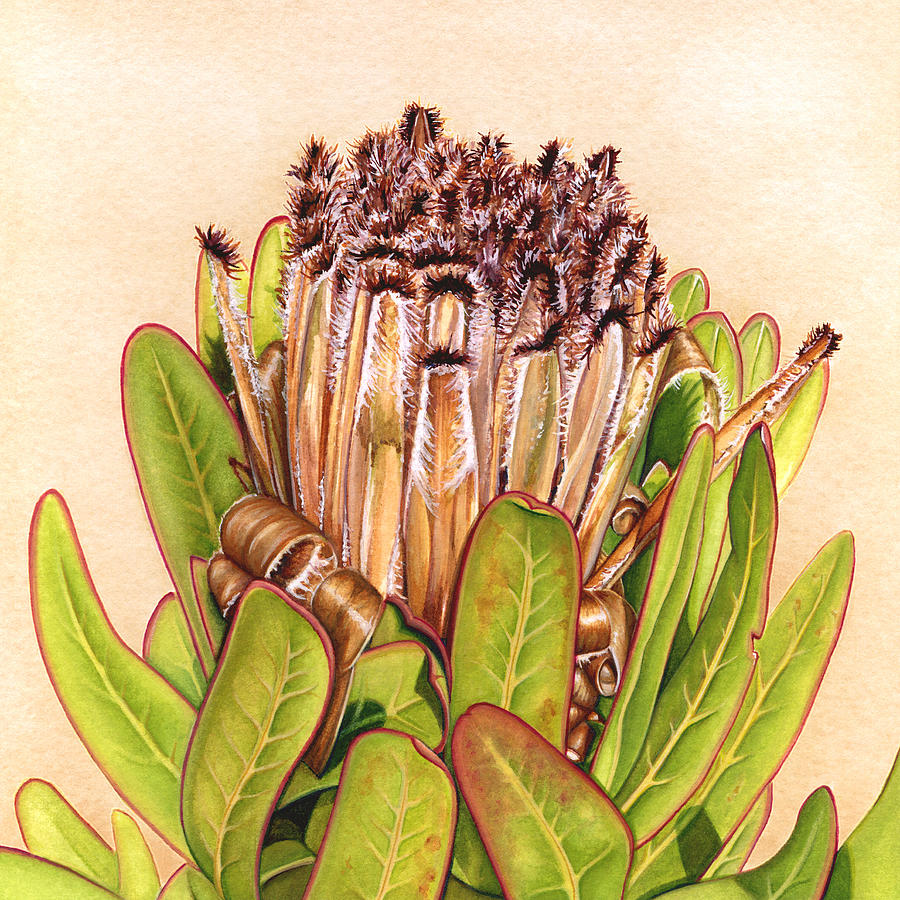 Protea Painting - Protea in Autumn by Suzannah Alexander